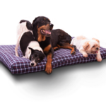 Three dogs on a large KuddleKrew Pet Bed